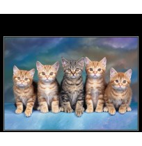 50X60 cm Kedi Baskılı Kamyon Paçalığı
