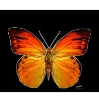 50X60 cm Kelebek Baskılı Kamyon Paçalığı